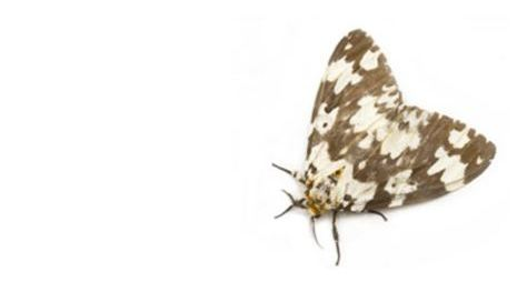 Moth control Reading Berkshire