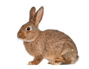 rabbit pest control in Reading